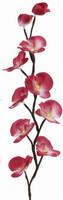 Orchidej svítící - růžová