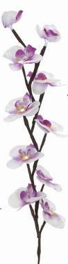 Orchidej svítící - bílá