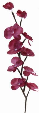 Orchidej svítící - fialová